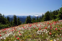 Vista alpina di estate Immagine Stock