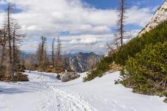 Vista alpina nelle vicinanze del passaggio Vrsic Fotografie Stock Libere da Diritti