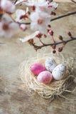 Vista alta e superiore di fine di un nido di Pasqua con i rami bianchi e rosa della molla e freckled di albero su fondo di legno Fotografia Stock Libera da Diritti