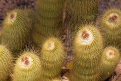 Vista alta vicina del cactus Fotografia Stock