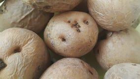 vista alta vicina della patata organica fresca nel mercato: struttura del fondo delle patate immagini stock libere da diritti