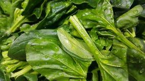 Vista alta vicina delle foglie verdi fertili delle verdure degli spinaci Priorità bassa di verdure fotografia stock libera da diritti