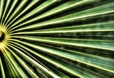 Vista alta vicina di macro di una foglia verde meravigliosamente strutturata Immagine Stock