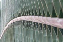 Vista alta vicina di macro di una foglia verde meravigliosamente strutturata Immagini Stock Libere da Diritti