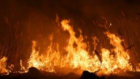 Vista alta vicina di un fuoco selvaggio pericoloso terribile alla notte in un campo Erba asciutta bruciante della paglia Un'ampia archivi video