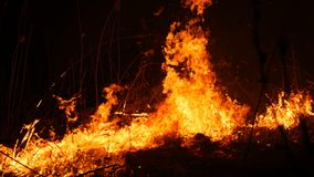 Vista alta vicina di un fuoco selvaggio pericoloso terribile alla notte in un campo Erba asciutta bruciante della paglia Un'ampia video d archivio