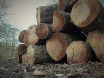 Vista alternativa de uma pilha do log recolhida após o furacão Michael fotos de stock