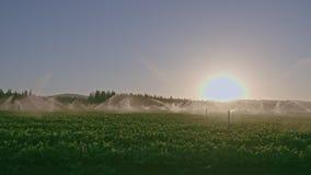Vista amplia de muchas regaderas del impacto que irrigan un campo durante puesta del sol metrajes