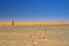 Vista amplia del borde del desierto Imagen de archivo libre de regalías