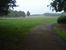 Vista amplia del campo verde en la primavera fotos de archivo libres de regalías