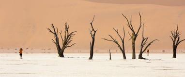 vista Ancho-cosechada de la cacerola de la sal de Deadvlei y de los árboles petrificados en la reserva de la fauna de Sossusvlei  Fotos de archivo libres de regalías