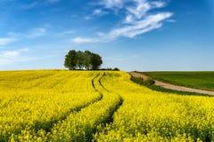 Vista ao longo de uma estrada de explora??o agr?cola de florescer o canola amarelo fotos de stock
