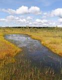 Vista ao pântano Imagens de Stock Royalty Free