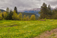 Vista aos montes de montanhas de Cáucaso sobre o campo de flor abaixo Fotos de Stock
