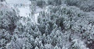 Vista aérea da floresta nevado no inverno filme