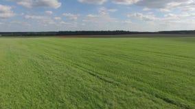 Vista aérea de campos verdes metrajes