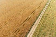Vista areale del campo di grano Immagine Stock