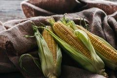 vista ascendente cercana de las mazorcas de maíz en el paño de saco foto de archivo libre de regalías