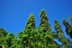 Vista ascendente de árboles contra el cielo Fotos de archivo libres de regalías
