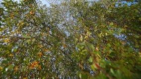 Vista ascendente de las ramas de árbol En el fondo usted puede ver el cielo azul metrajes
