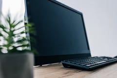 vista ascendente próxima da planta em pasta e do monitor do computador e do teclado de computador vazios imagem de stock
