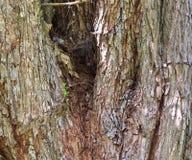 Vista ascendente próxima em casca de árvore belamente detalhada dos carvalhos e das outras árvores fotografia de stock royalty free