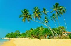 Vista asombrosa de la playa arenosa exótica con las palmeras Fotografía de archivo libre de regalías