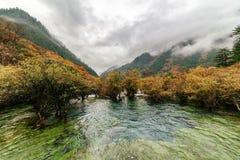 Vista asombrosa de los bajíos de los bonsais, reserva de naturaleza de Jiuzhaigou Fotos de archivo libres de regalías