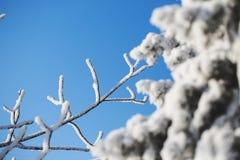 Vista astratta della neve di inverno sui rami di albero Fotografia Stock