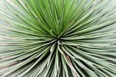Vista astratta della pianta del cactus immagine stock