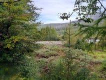 Vista através da flora ao rio seco imagens de stock royalty free