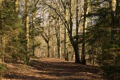 Vista através da floresta da mola um o amanhecer Foto de Stock Royalty Free