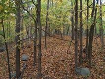 Vista através das árvores Fotografia de Stock Royalty Free