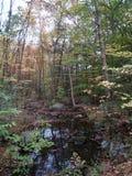 Vista através das árvores Imagens de Stock Royalty Free