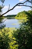 A vista através dos ramos das árvores no rio fotografia de stock royalty free