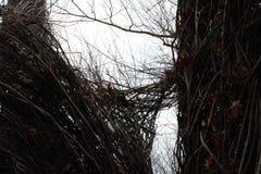 Vista através dos ramos torcidos Fotografia de Stock Royalty Free