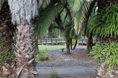 Vista attraverso gli alberi Fotografie Stock