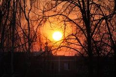 Vista attraverso gli alberi al tramonto in primavera Immagini Stock Libere da Diritti