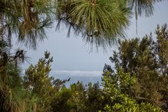 Vista attraverso i rami degli alberi della conifera sulla valle nebbiosa e nuvolosa, Tenerife, Spagna Immagine Stock