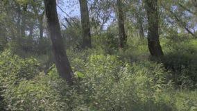 Vista attraverso i rami degli alberi e vista sul pezzo di acqua Sguardo cinematografico, 4K stock footage