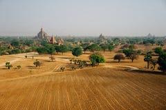 Vista attraverso il campo della pagoda con gli alberi in Bagan Myanmbar Burma Fotografie Stock Libere da Diritti