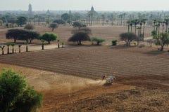 Vista attraverso il campo della pagoda con gli alberi in Bagan Myanmbar Burma Fotografia Stock Libera da Diritti