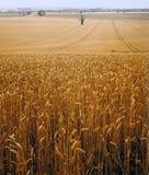 Vista attraverso il paesaggio agricolo del campo di mais Fotografie Stock