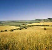 Vista attraverso il paesaggio agricolo del campo di mais Immagini Stock