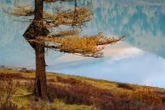 Vista attraverso l'albero sul lago in valle di Akkem nel parco naturale delle montagne di Altai Fotografia Stock