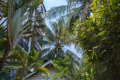 Vista attraverso la vegetazione di giungla al cielo blu cambodia fotografia stock libera da diritti