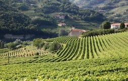 Vista attraverso le viti verso una chiesa in Piemonte, Italia Immagini Stock
