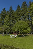 Vista autunnale verso il giardino pubblico con la tavola di picnic al prato inglese della sedia, all'albero ed all'asilo all'aper Immagine Stock Libera da Diritti