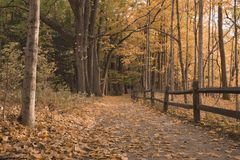 Vista baja de la trayectoria que camina en Forest During la caída foto de archivo libre de regalías