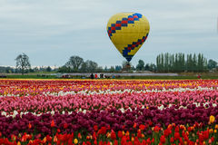 Vista Balloon over blooming field Stock Photography